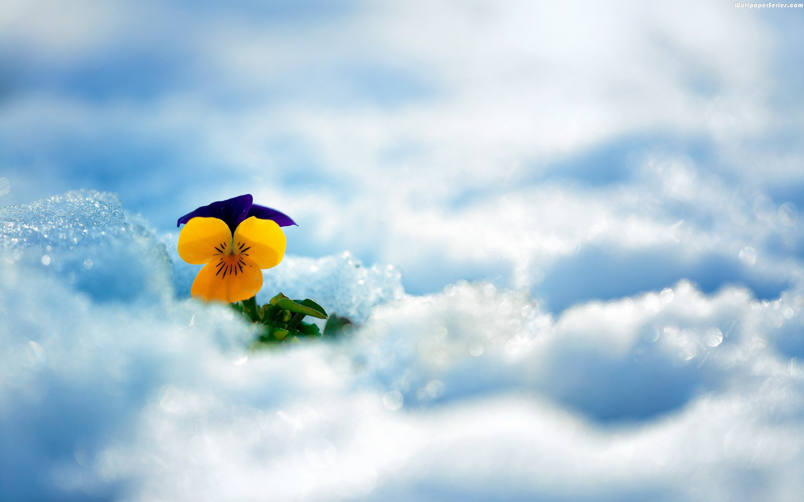 Beautiful-Yellow-Flower-In-Clouds-Winter-HD-Wallpaper