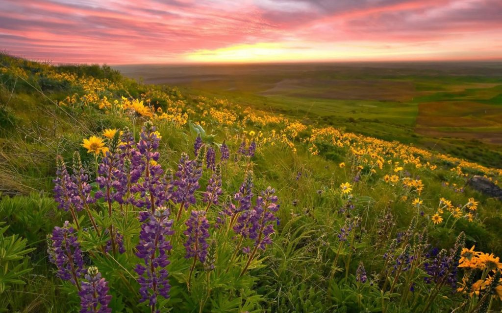 valley-of-flowers-96015